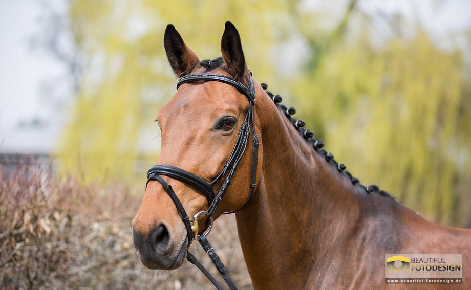 Pferdeshooting RFV GP